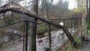 Následky nedělního vichru v olomoucké zoo