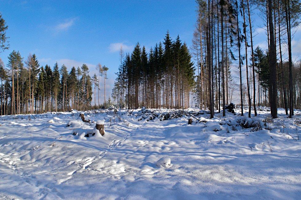 Zasněžené okolí Svatého Kopečka u Olomouce, 11. ledna 2019
