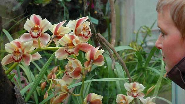 Sbírkové skleníky s výstavou orchidejí