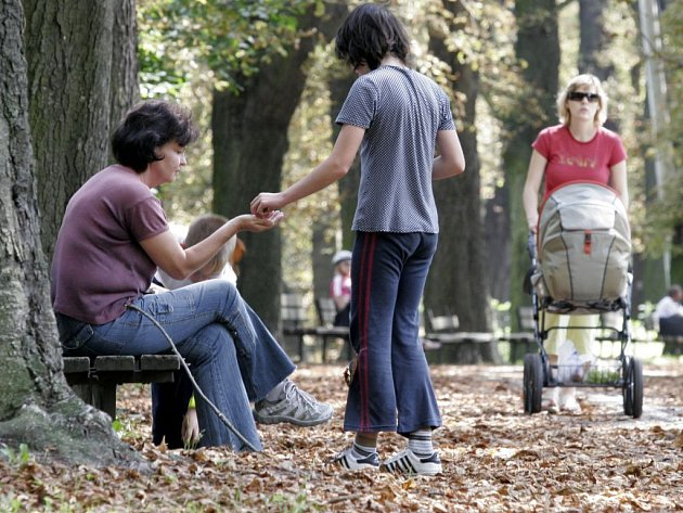 Zhnědlé listí kaštanů v olomouckých parcích