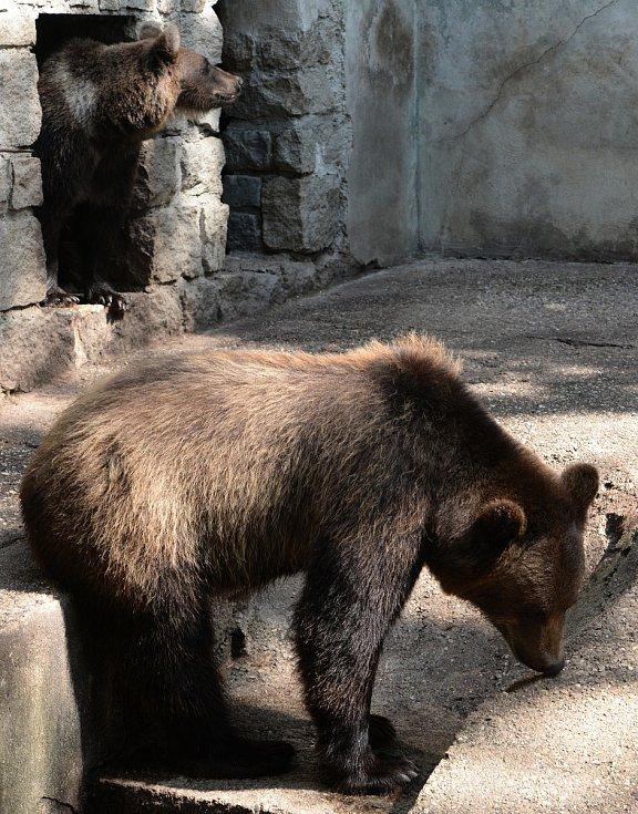 Medvědi Máša a Arno cestují do Českého Krumlova.