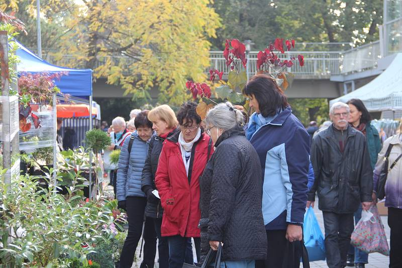 Podzimní Flora začala, až do soboty je přístupná od 9 do 17 hodin. V neděli končí v 16 hodin.
