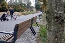 Před pěti lety vysazené kaštany v Rudolfově aleji v Olomouci decimuje slizotoková nekróza.