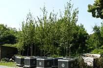 Tyto stromky by mohly stát v centru města.