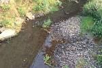Městský úřad Šternberk kvůli suchu zakázal odběr vody z koryta Bystřice. Na snímku situace v Domašově nad Bystřicí poté, co v pondělí odpoledne trochu zapršelo.