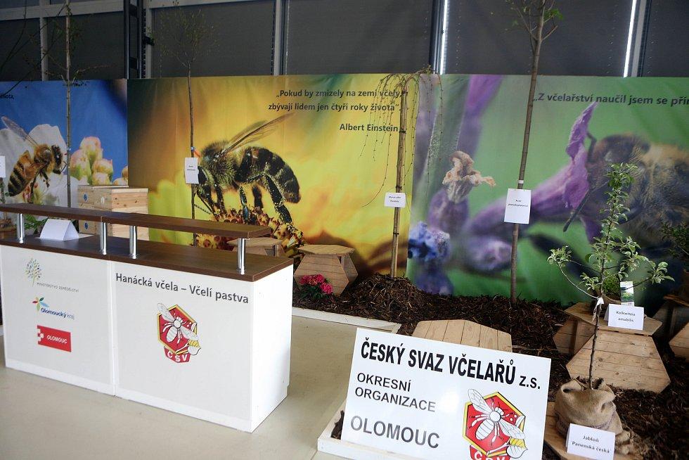 Poslední přípravy na jarní etapu Flory Olomouc 2019