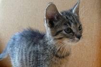Šternbeští strážníci se minulý týden stali opatrovateli osmi koťat. Pět už jich má zajištěný nový domov. Dalším třem ještě budoucí páníčky hledají.