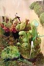 Výstava masožravých rostlin v olomouckém Vlastivědném muzeu