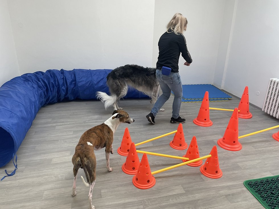 Fitko pro psy v Olomouci, 3. června 2021