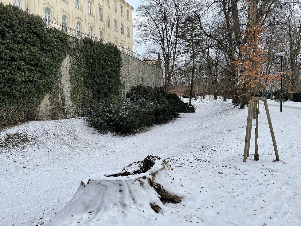 Zima v Bezručových sadech v Olomouci