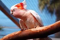 Letošní už jedenadvacátý ročník nabídne na dva tisíce exotických ptáků více než 250 druhů - na snímku kakadu inka