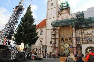 Usazení vánočního stromu v Olomouci