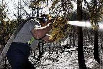 Požár lesa u Vilémova - neděle 29. 4. 2012