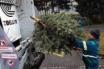Svoz vyhozených vánočních stromků v Olomouci. Technické služby je vozí do křelovské kompostárny