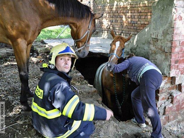 Hasiči vyprošťují koně, který se propadl do sklepa v Tučapech