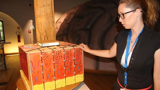 Koordinátorka bioologie Alena Vláčilová ukazuje nový model lidské kůže.