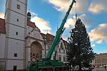 Kácení vánoční borovice na olomouckém Horním náměstí