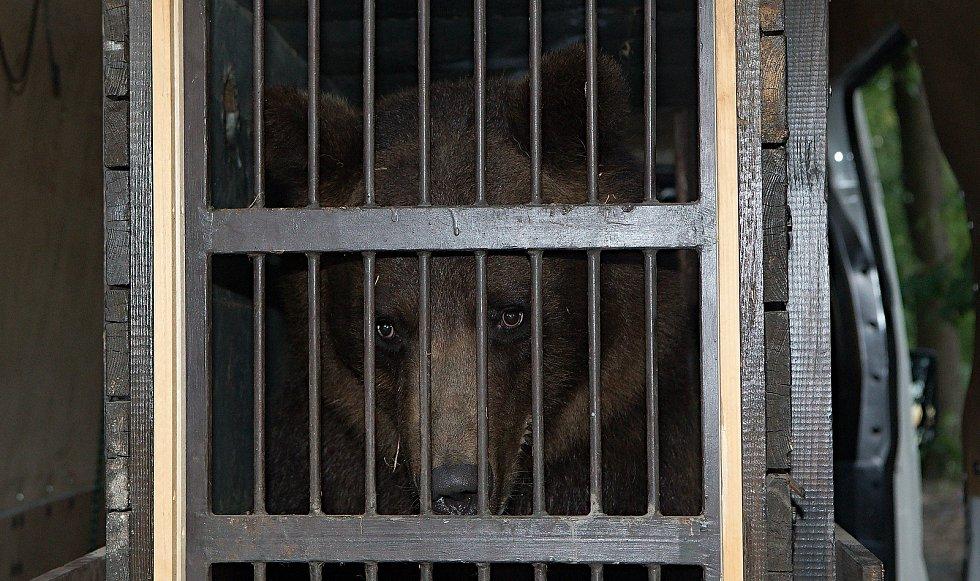 Zabavení ruští medvědi Arno a Máša cestují do medvědária Český Krumlov.