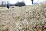 25. března 2018. UStrejčkova lomu mezi Krčmaní a Grygovem začal rozkvétat koniklec velkokvětý. Jde ojedinou lokalitu na Olomoucku, kde je možné spatřit tuto chráněnou rostlinu, navíc vnevídaném počtu.  Láká obdivovatele z celého Česka.