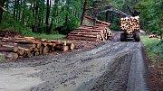 Lesy ČR likvidují kalamitu u Radíkova. V boji s kůrovcem  prohrávají.