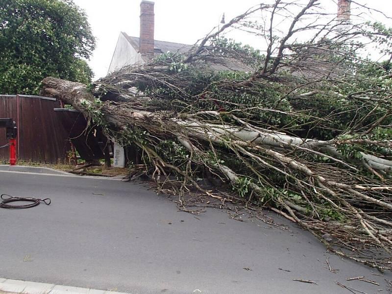 Vichr shodil strom v Olomouci