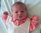 Nikol Beranová, Litovel, narozena 17. října ve Šternberku, míra 50 cm, váha 3440 g