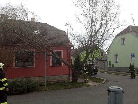 Hasiči zasahují u stromu, který shodil silný vítr v Martinově ulici v Olomouci