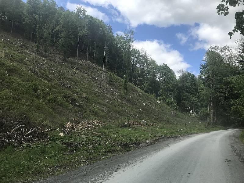 V navrhovaném hájeném území lokality Bělkovice je většina pozemků zalesněna. I zde jsou holiny po kůrovcové kalamitě. (12.května 2020)