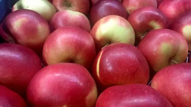 Jablka po třech měsících skladování v halách ve Vilémově