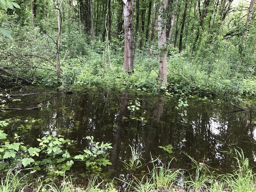 V lužních lesích na Litovelsku jsou zatopena líhniště komárů. V blízkosti obcí provádějí pracovníci opakované postřiky.