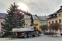 Na Hlavním náměstí ve Šternberku již stojí krásně rostlý smrk. Starý je přes 60 let a vysoký přibližně 16 metrů,