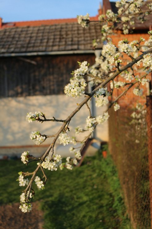 Jarní snímky ze Slatinic.