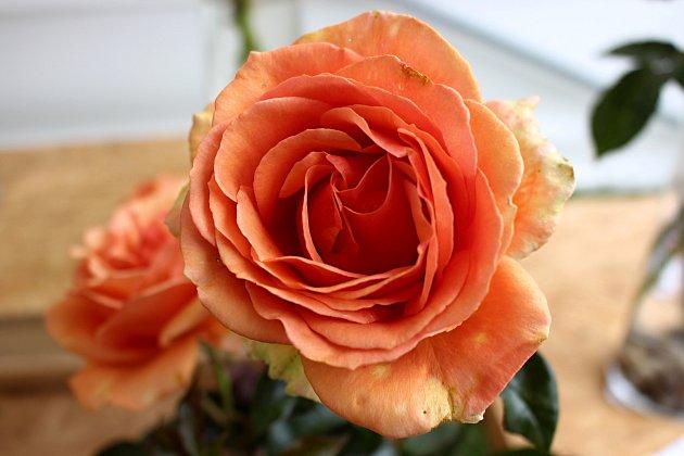 Vyznání růžím volomouckém rozáriu vsobotu 11.července 2020.