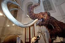 Giganti doby ledové - výstava pravěkých zvířat v olomouckém Vlastivědném muzeu