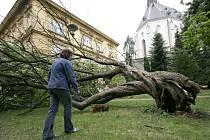 Náporu větru strom neodolal.