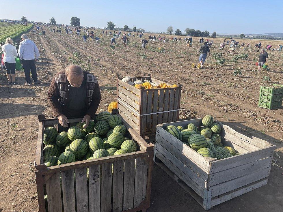 Pěstitel Ladislav Kašpar z Těšetic-Vojnic zahájil populární samosběr zeleniny za lidové ceny. Zájem je obrovský, 25. srpna 2021.