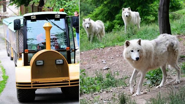 Safari Amerika v olomoucké zoo na Svatém Kopečku