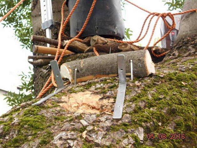 Památný strom nacházející se vulici Zeyerova vOlomouci nenávratně poškodili tři chlapci vpátek ráno. Udělali si na něm bunkr.