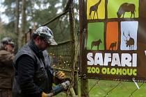 Příprava afrického safari v olomoucké zoo