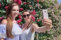 Výstava a festival Vyznání růžím přilákala o víkendu téměř sedm tisíc lidí.