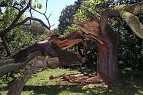 Více než sto let starý dub letní rostoucí v těsné blízkosti Rudolfovy aleje a cyklostezky v olomouckých Smetanových sadech se zlomil.