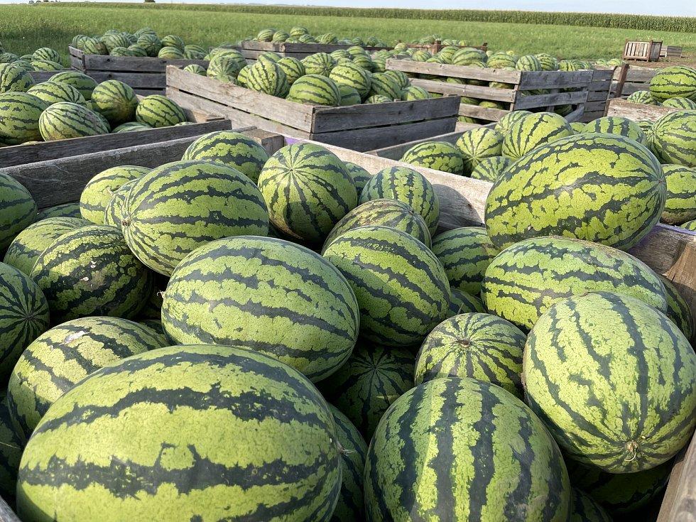 Pěstitel Ladislav Kašpar z Těšetic-Vojnic chystá populární samosběr zeleniny za lidové ceny. Propukne ve středu 25. srpna, 22. srpna 2021.
