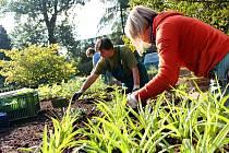 Přes osmdesát druhů rostlinek vysazují  zahradníci v Botanické zahradě v Olomouci. Záhon ve tvaru písmene S je součástí nové zahrady pro nevidomé a slabozraké.