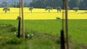 Žlutá pole na Hané