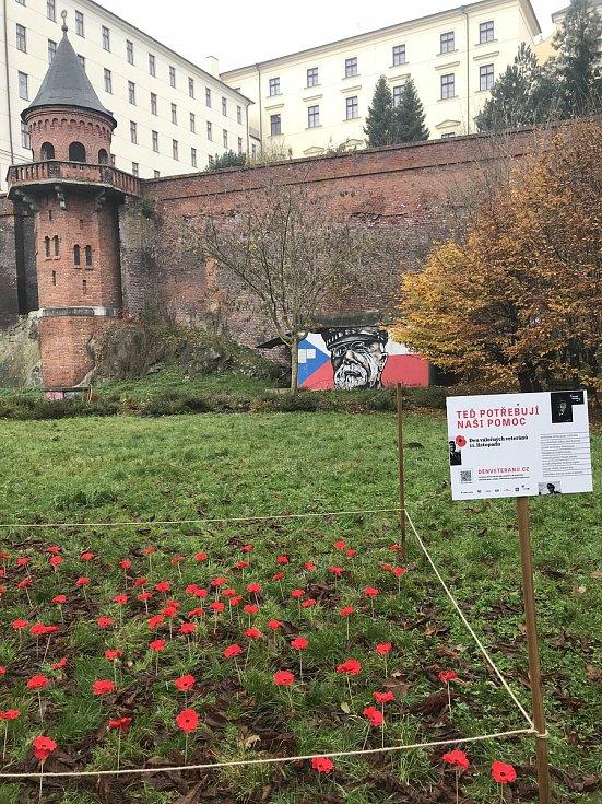 Makové pole vyrostlo v Bezručových sadech v Olomouci  jako připomínka mezinárodního Dne válečných veteránů