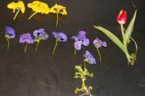 Za krádež těchto květin hrozí muži až 3 roky vězení