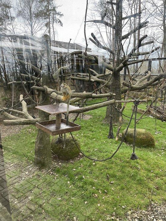 Zoo Olomouc, 18. dubna 2021