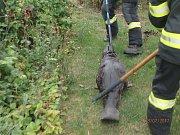 V Pňovicích hasiči lovili bobra z bazénu