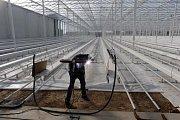 Skleník pro hydroponické pěstování rajčat v Haňovicích