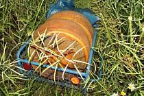 Ukradené bochníky sýra, které si dva zaměstnanci schovali v poli
